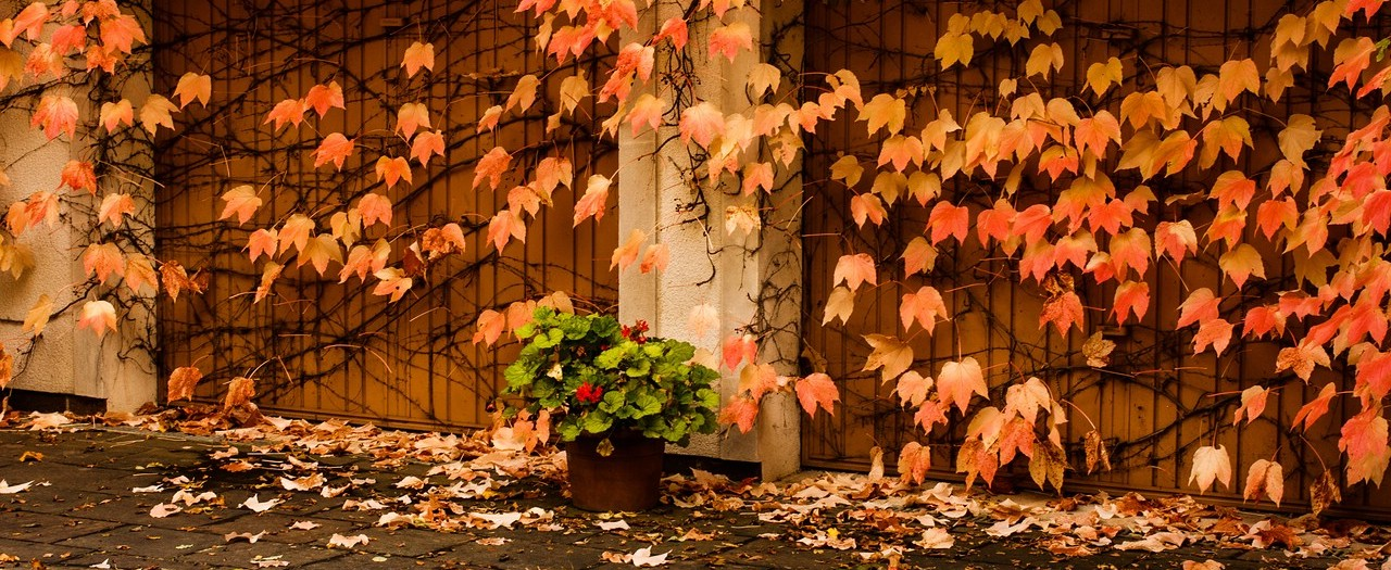 Herbstimpressionen ...